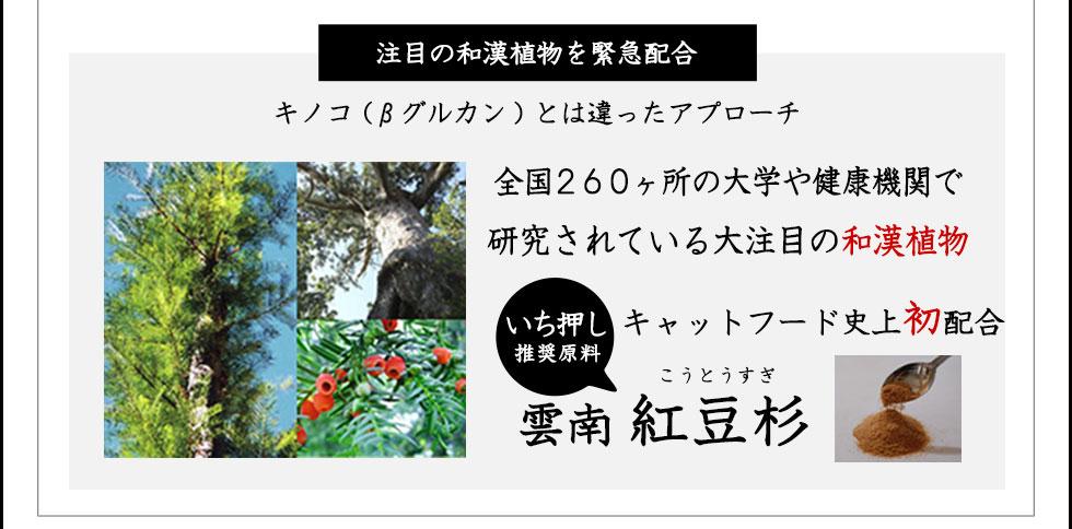 愛猫用和漢レシピ 猫のマクロビとは?